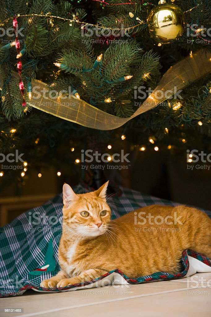 Christmas Cat royalty-free stock photo