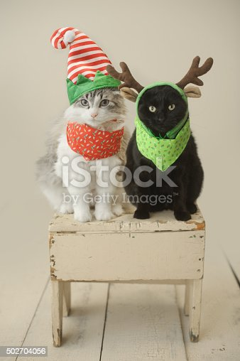 Cats dressed up in Christmas-themed costumes.