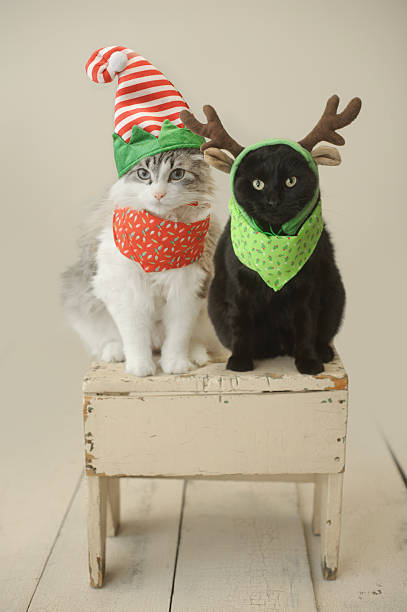 weihnachten katzen - katze weihnachten stock-fotos und bilder