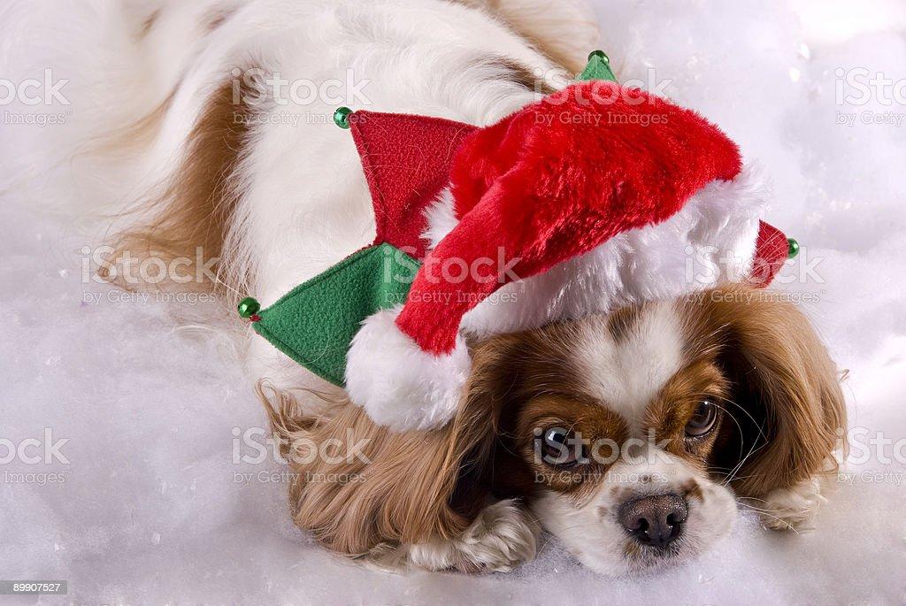 Weihnachten Cavalier Lizenzfreies stock-foto