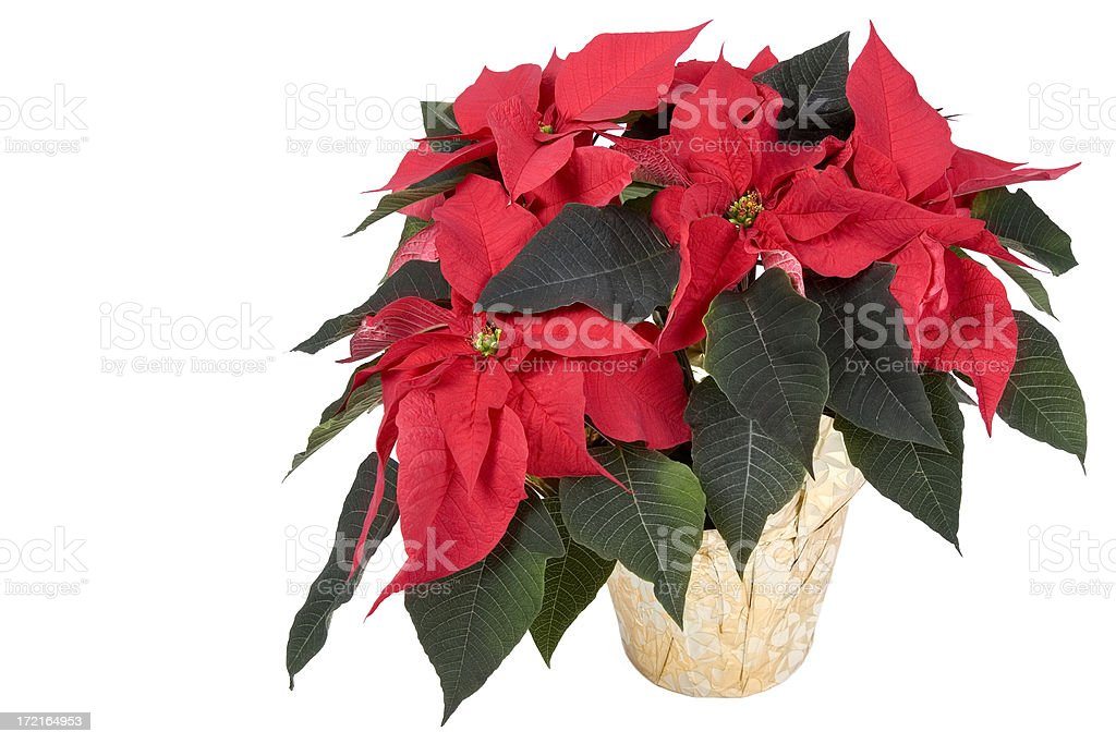 Christmas Colours royalty-free stock photo