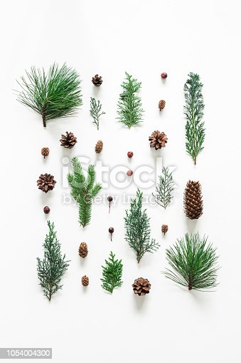 Christmas composition. Coniferous tree branches on white background. Christmas, winter, new year concept. Flat lay, top view
