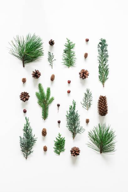 kerst samenstelling. naaldhout boomtakken op witte achtergrond. kerst, winter, nieuwjaar concept. plat lag, top uitzicht - naaldboom stockfoto's en -beelden
