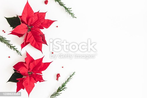 Christmas composition. Frame made of christmas poinsettia and fir branches on white background. Top view, flat lay, copy space