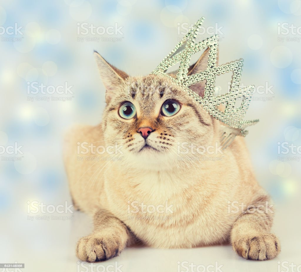 Christmas concept. Cat with crown stock photo