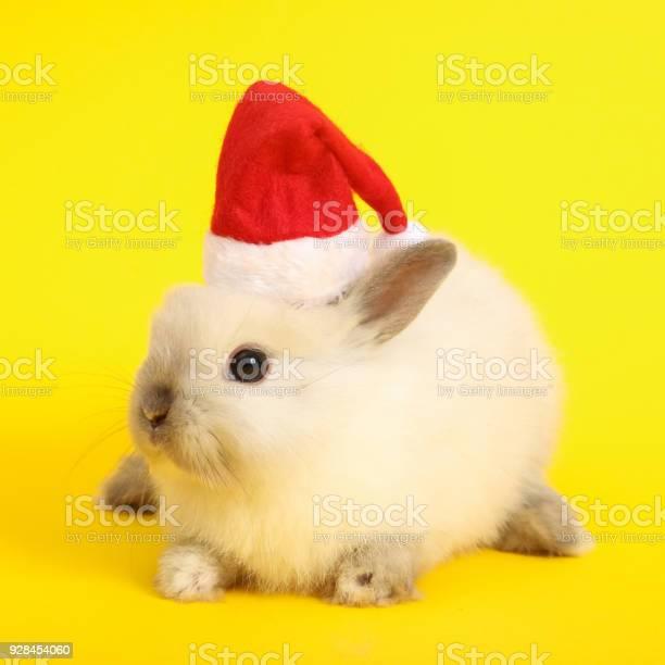 Christmas cute rabbit picture id928454060?b=1&k=6&m=928454060&s=612x612&h=bvzc3re6gcv9 33qylljlnvdspv0fywpgert80zwqaq=
