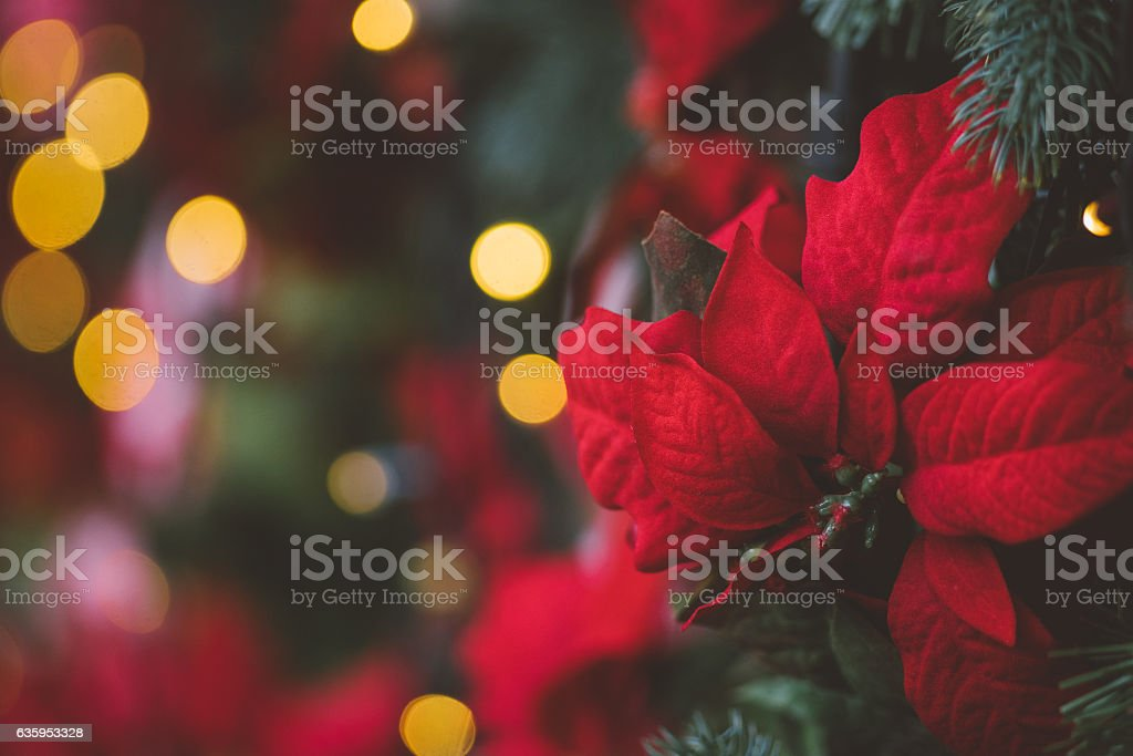 Christmas decoration background with red artificial poinsettia f stock photo