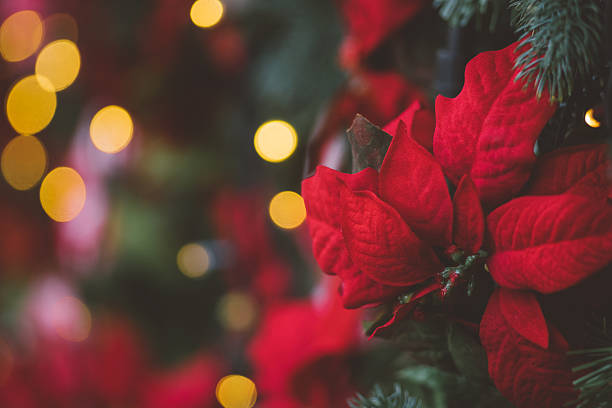 Christmas decoration background with red artificial poinsettia f – Foto