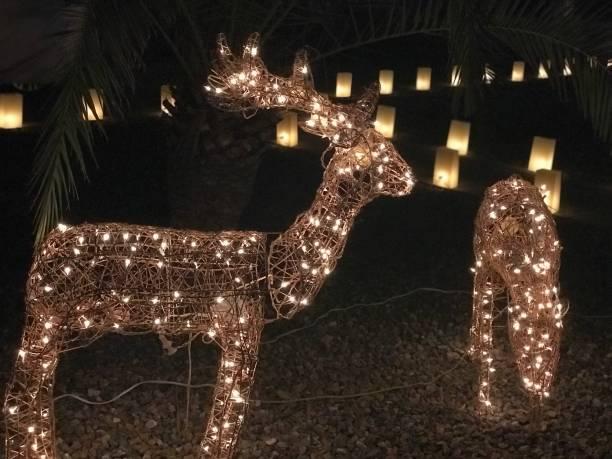 weihnachten dekoration hirsch mit lichterkette - lichtschlauch stock-fotos und bilder