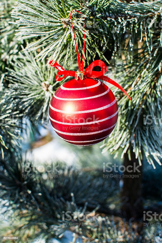 christmas decorations big red ball on xmas tree outdoor royalty free stock photo