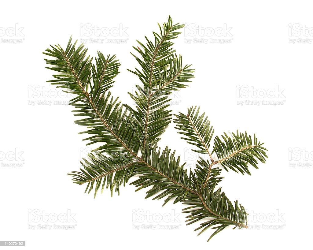 Christmas decorations -  fir branch royalty-free stock photo