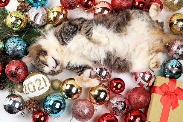 Christmas decorations postcard banner for showing happy new year 2021 picture id1282373328?b=1&k=6&m=1282373328&s=612x612&w=0&h=uwn2bjhzs hlff3ohcjbwzf63jlbxw6l0ogynt8zeho=