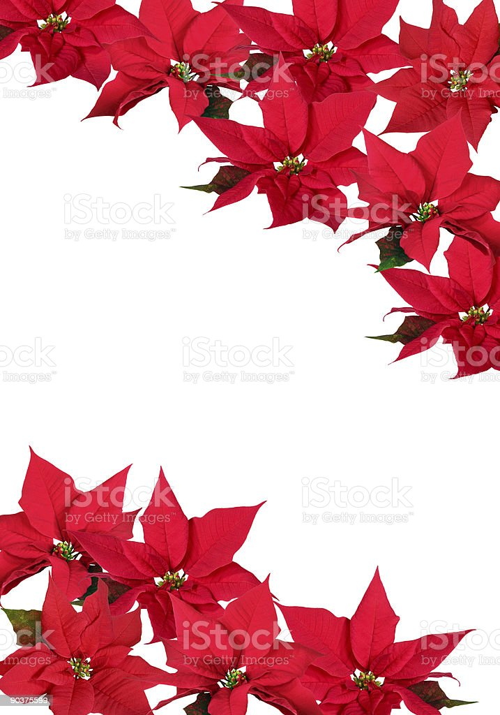 Christmas Decorations - Red Poinsettia royalty-free stock photo