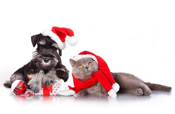 weihnachten hund und katze - katze weihnachten stock-fotos und bilder