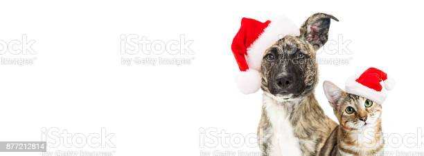 Christmas dog and cat website banner picture id877212814?b=1&k=6&m=877212814&s=612x612&h=f0tmyzylfsmmzknaghpjqeevr don8fbofsx0z 7owi=