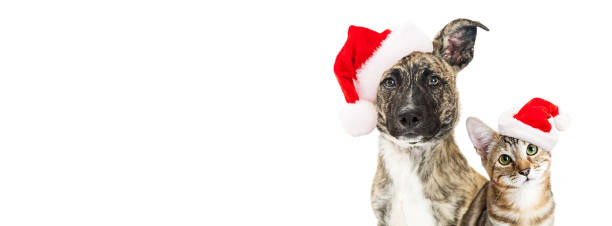 Christmas dog and cat website banner Cute young mixed breed dog and kitten together wearing santa hats, looking into camera. Horizontal website banner with copy space. santa hat stock pictures, royalty-free photos & images