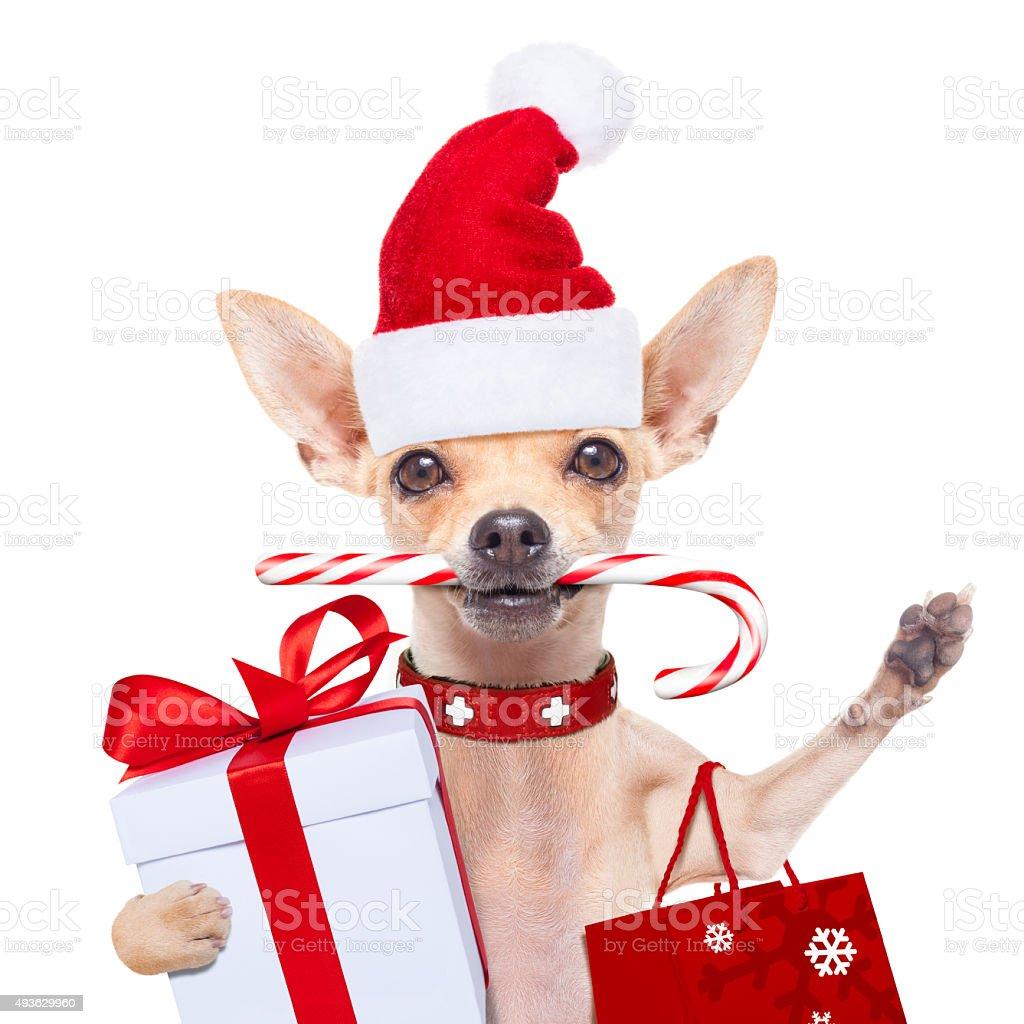 christmas dog as  santa claus stock photo