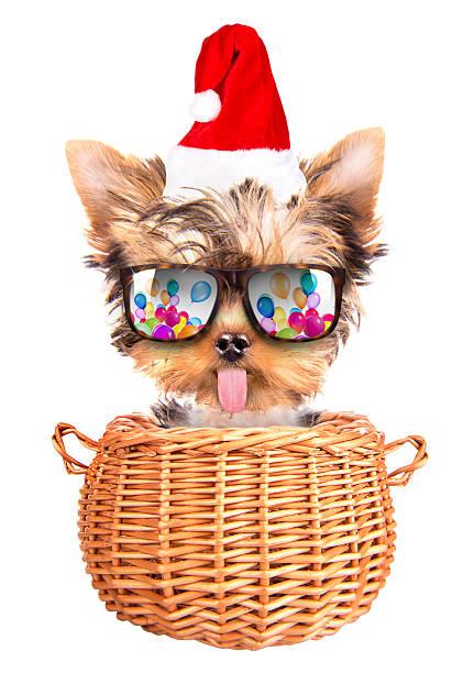 christmas dog as santa in a basket stock photo