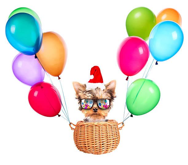 christmas dog as santa with balloons stock photo