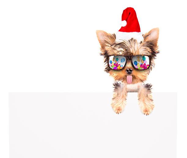 christmas dog as santa with bunner stock photo