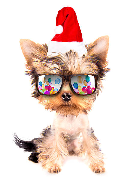 christmas dog as santa with party glasses stock photo