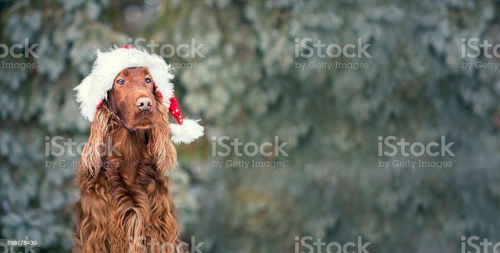 Christmas dog banner stock photo
