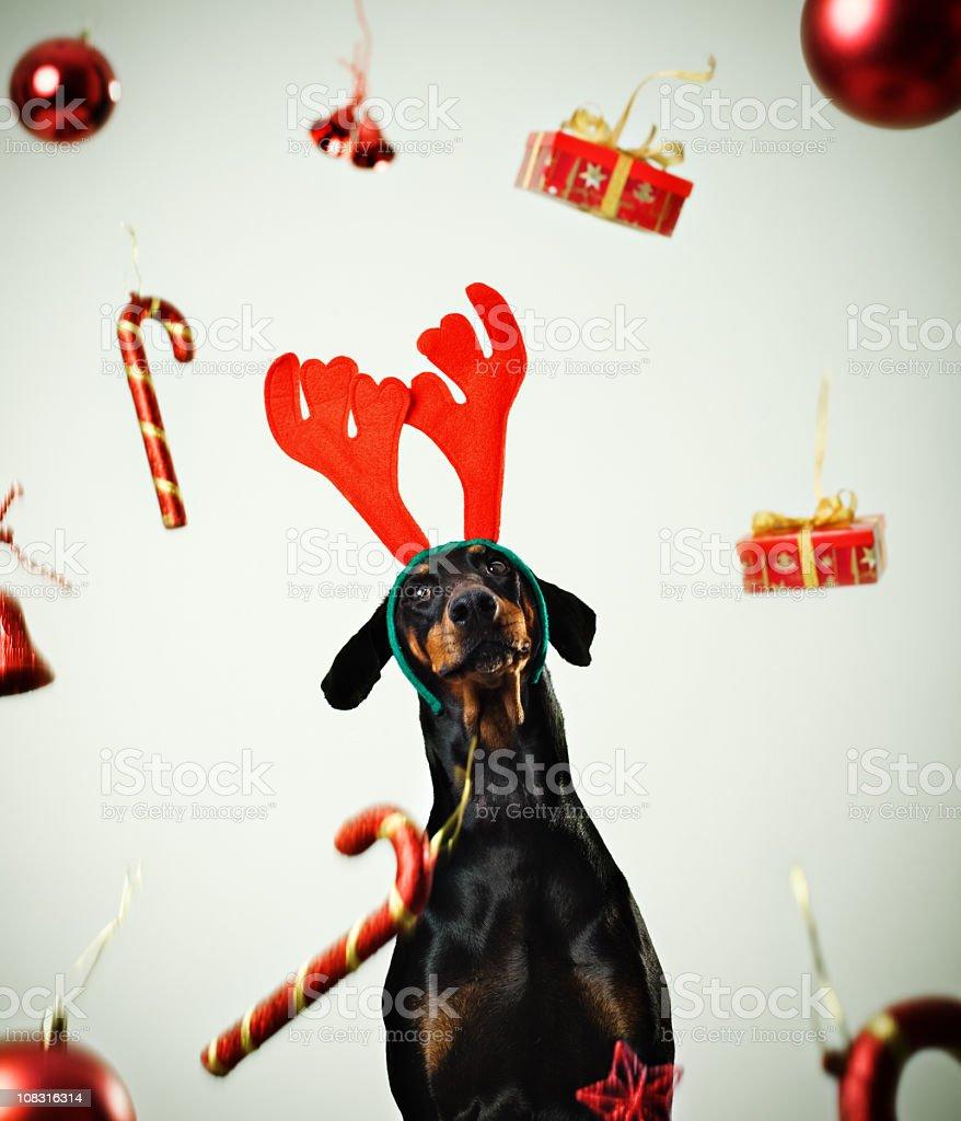 Christmas dog. royalty-free stock photo