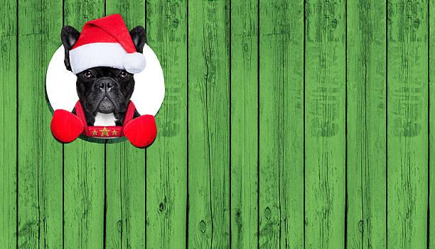 weihnachten hund - sprüche kalender stock-fotos und bilder