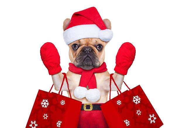 Christmas dog shopping picture id521775367?b=1&k=6&m=521775367&s=612x612&w=0&h=g5pg9z0jv5e1mh axxy1tvehqdxjz8g drrpdlvy8xo=