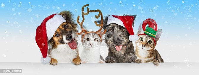Cute Christmas dogs and cats together hanging paws over white horizontal website banner or social media header