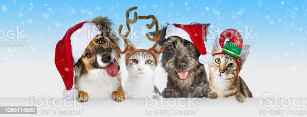 Christmas dogs and cats over white web header picture id1085114580?b=1&k=6&m=1085114580&s=612x612&h=ybpx ctfeezi4bsldtvtgnwli kqjwmp3ynnwrsleue=