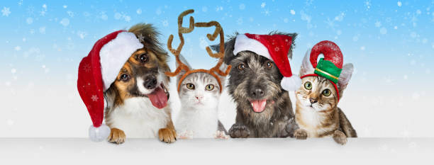 Christmas Dogs and Cats Over White Web Header stock photo