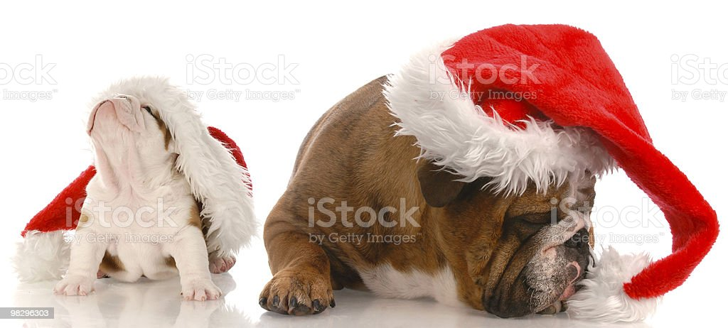 Natale cani foto stock royalty-free