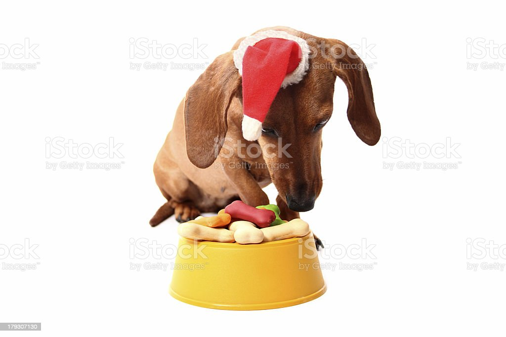 Christmas dog's supper royalty-free stock photo