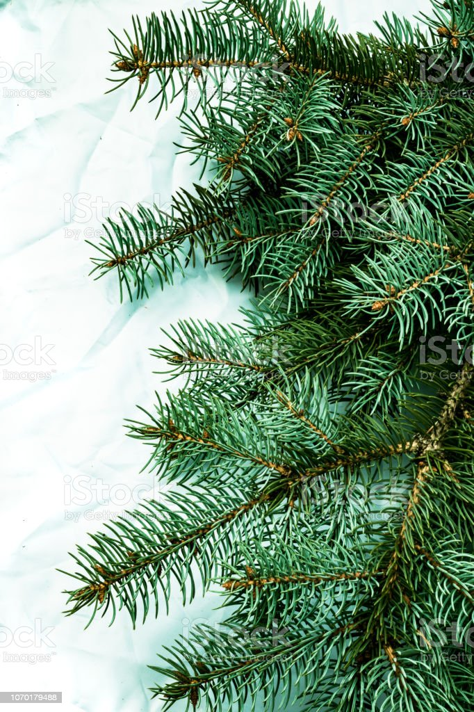 Christmas fir tree background on white background. Fir tree branches...