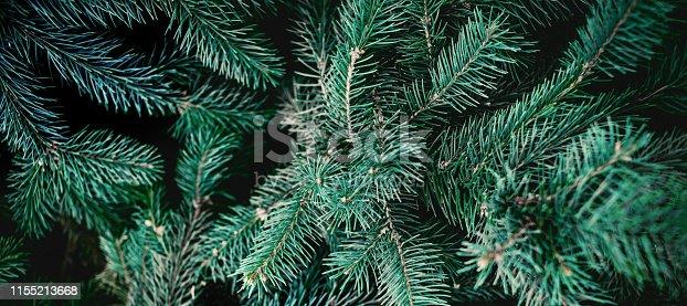 Christmas  Fir tree  Background. Pine tree brunch close up. Green spruce