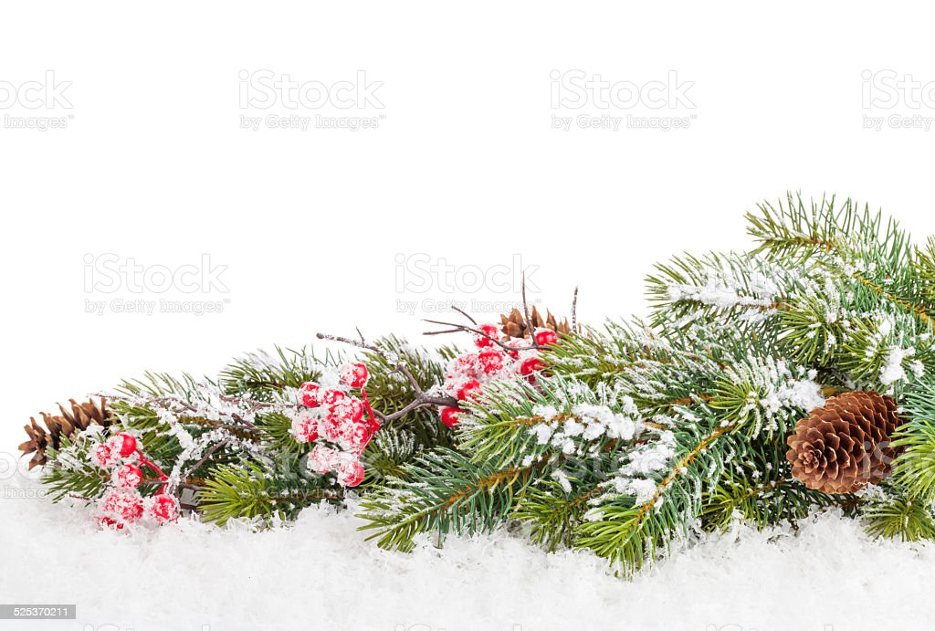Christmas fir tree branch with holly berry stock photo