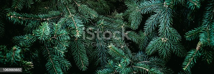 istock Christmas fir tree branches Background. Christmas pine tree wallpaper. Copy space.