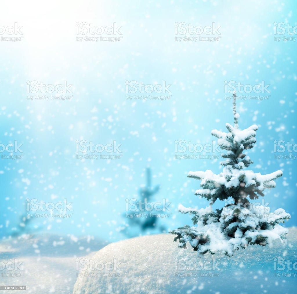 Sfondi Paesaggi Natalizi.Rami Di Abete Natalizio Su Sfondo Blu Sfocato Sfondo Neve Natalizio E Invernale Paesaggio Con Foresta Di Abeti E Nevica N Fotografie Stock E Altre Immagini Di Albero Istock