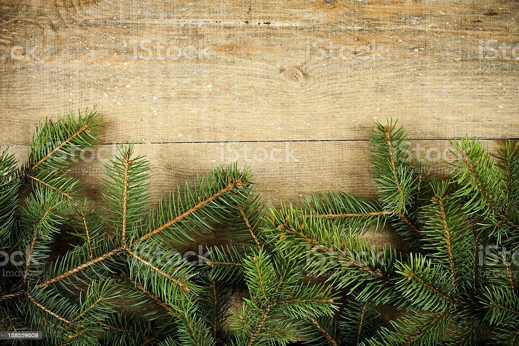 크리스마스 전나무 royalty-free 스톡 사진
