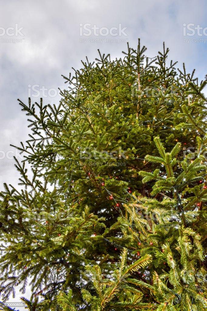 Tannenarten Weihnachtsbaum.Weihnachten Tannenarten Stockfoto Und Mehr Bilder Von Abstrakt Istock