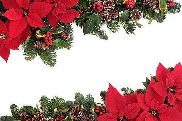 christmas floral border - kerstster stockfoto's en -beelden