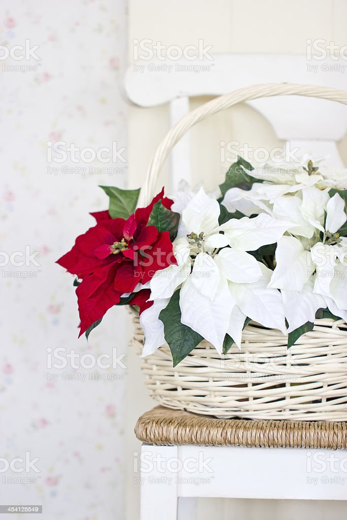 Christmas flowers with basket on the chair. royalty-free stock photo