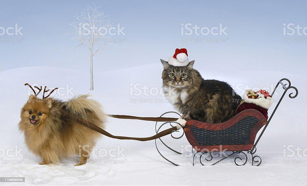 Christmas for Max & Jolie stock photo
