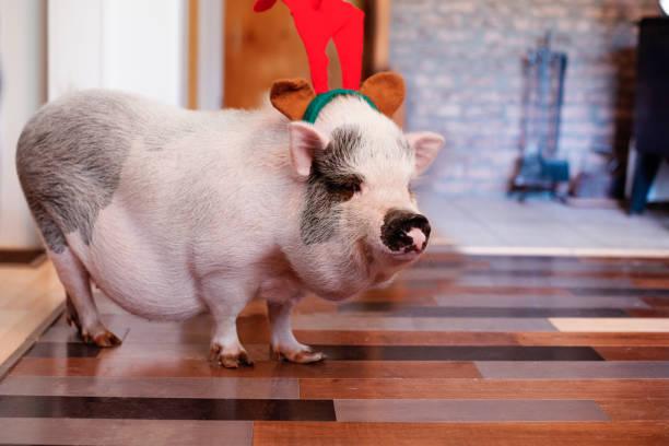 Christmas for Pets stock photo