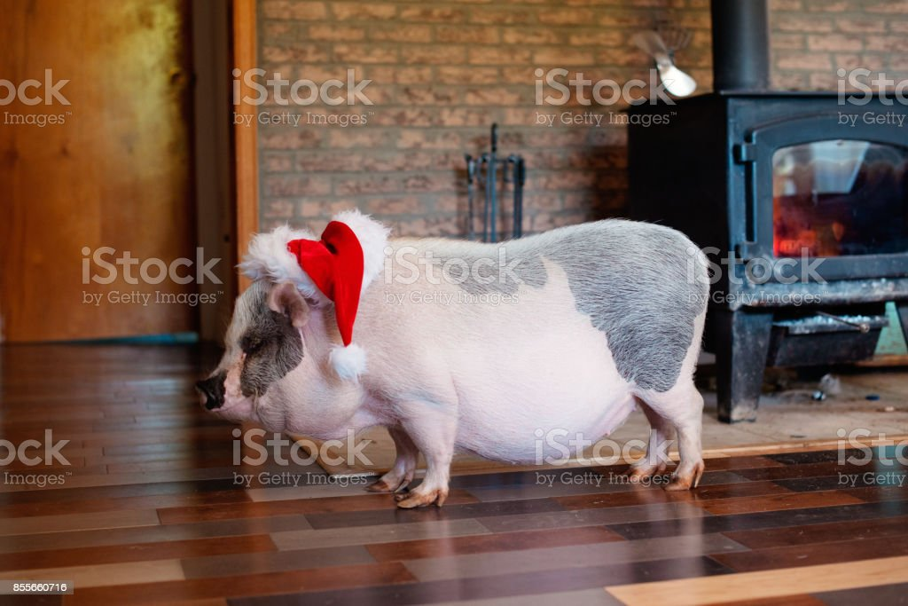 Christmas for Pets stock photo