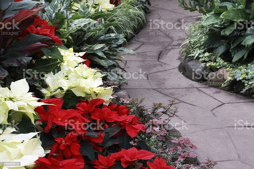 Christmas Garden royalty-free stock photo