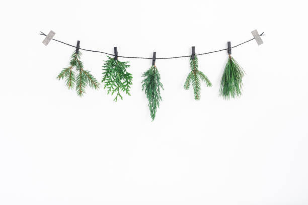Christmas garland, conifer tree branches. Flat lay, top view stock photo