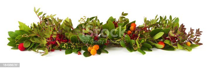 Christmas natural garland on white background.Related pictures: