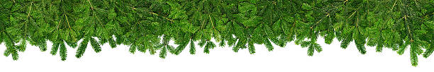 christmas garland super wide panorama banner with fir branches stock photo